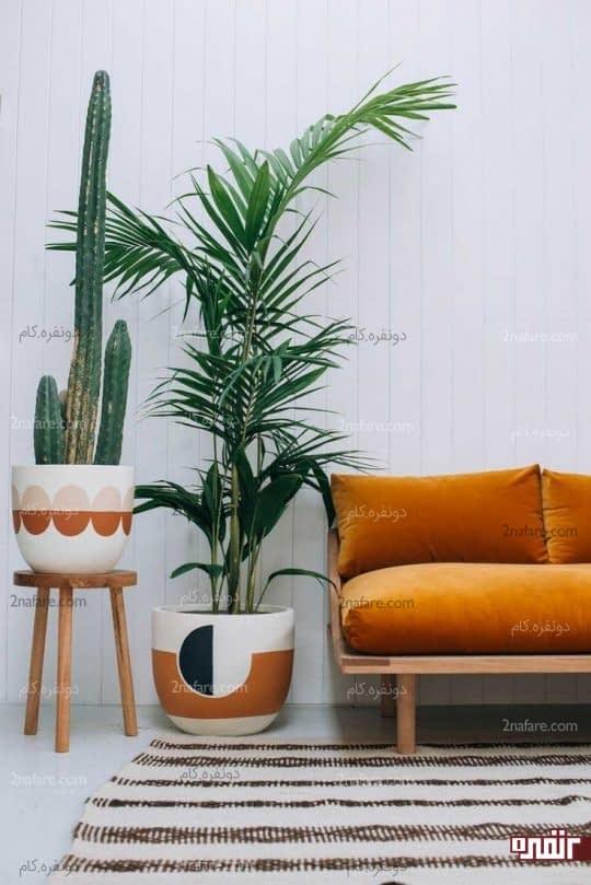 چگونه از گیاهان در چیدمان خونه استفاده کنیم؟