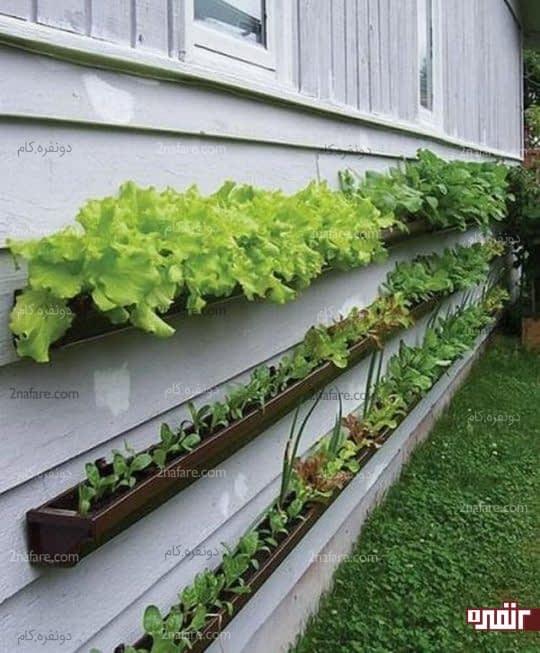 گلدان های پلاستیکی و نصب اونها رو ی دیوار برای کاشتن سبزی