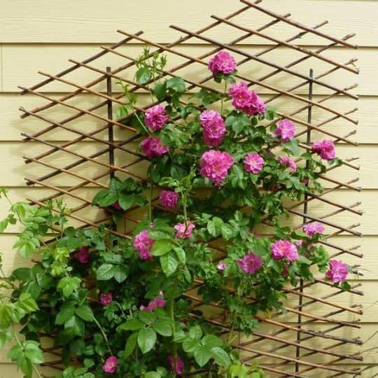 دیوار تراس پوشیده از گل های زیبا