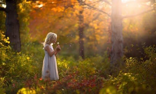 طبیعت بهترین نورپرداز عکس ها