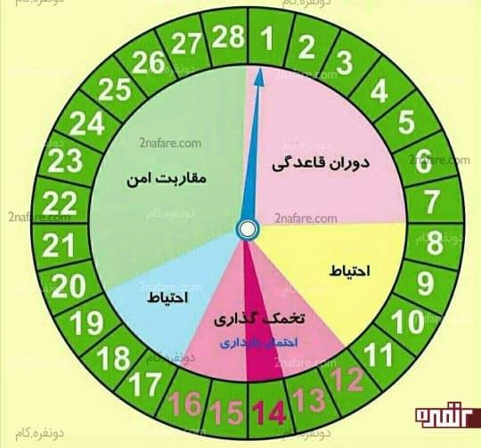 چرخه قاعدگی