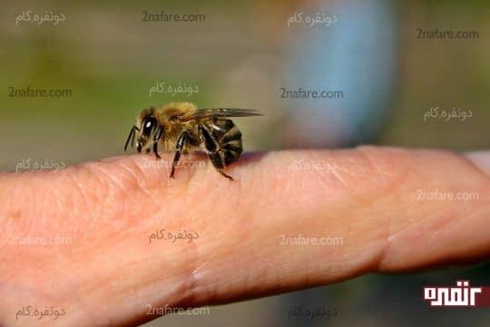 درمان نیش زنبور عسل