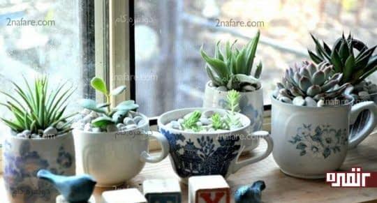 استفاده از سنگ های زیبا برای تزیین گلدان کاکتوس