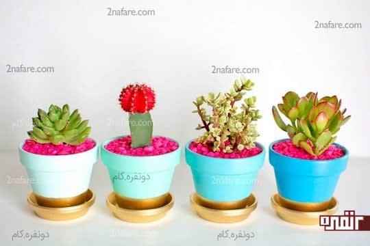 شن های رنگی در گلدان های کاکتوس