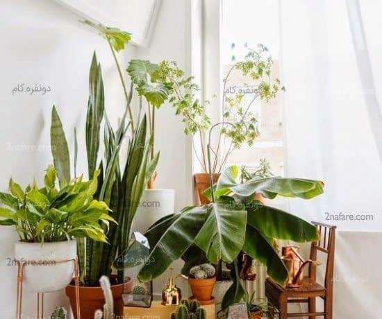 مجموعه ای از گل های زیبا در کنار هم برای تزئین اتاق نشیمن