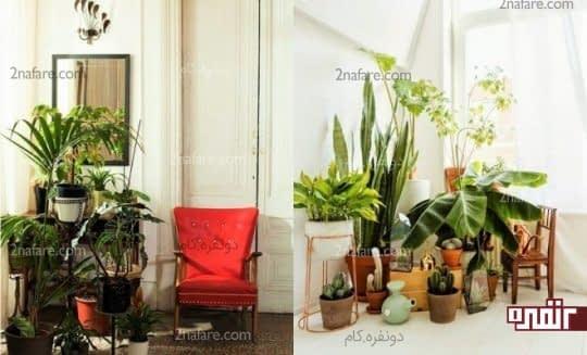 نحوه ی استفاده از گل ها و گیاهان در دکوراسیون اتاق نشیمن