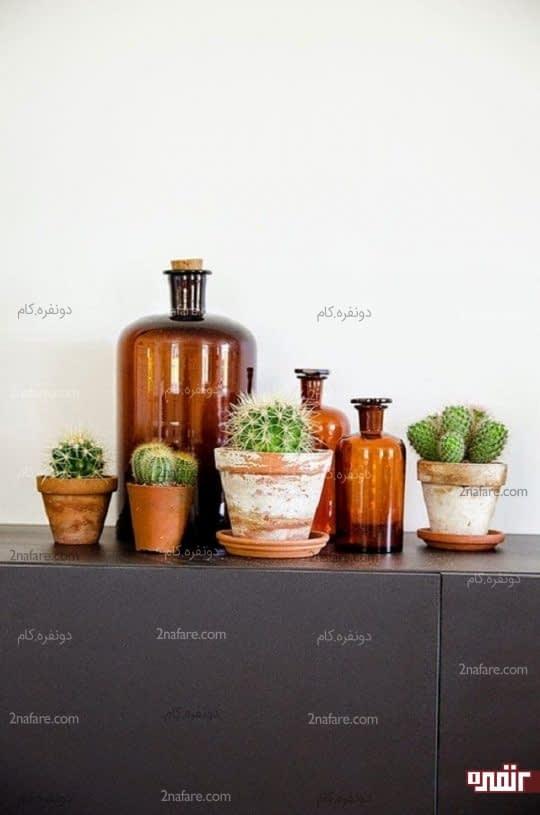 کاکتوس های زیبا برای تزئین فضاهای داخلی