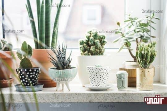 گلدان های زیبا برای کاشت گیاهان