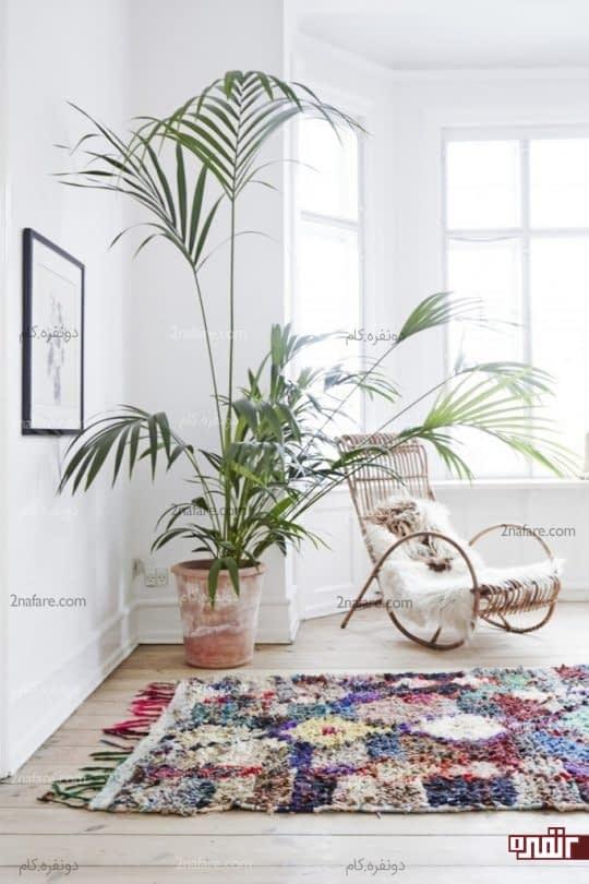 گیاهان بلند و زیبا برای استفاده در دکوراسیون داخلی
