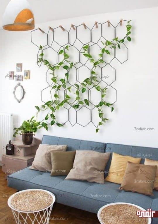 استفاده از گیاهان رونده