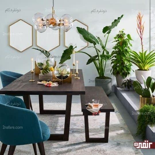آینه و گیاهان در غذاخوری