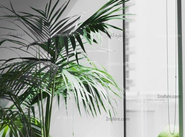 فضایی زیبا و دلنشین با استفاد ه از درخت پالم