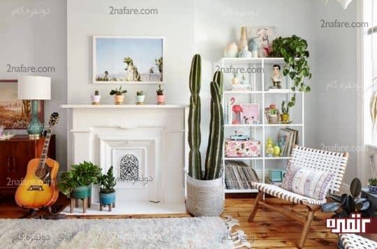 گل ها و گیاهان برای تزیین خانه اجاره ای