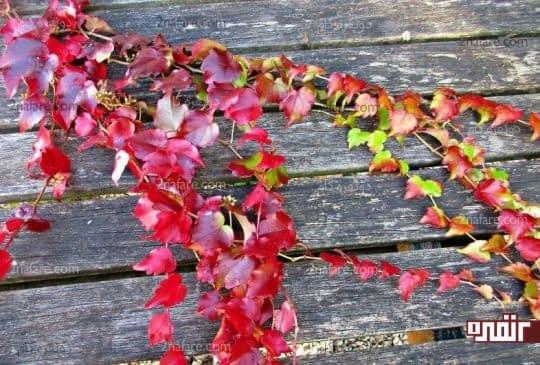برگهای زیبا برای دکوپاژ روی کاغذ