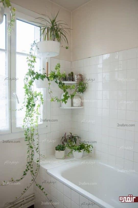 تزیین دکور حمام با گیاهان