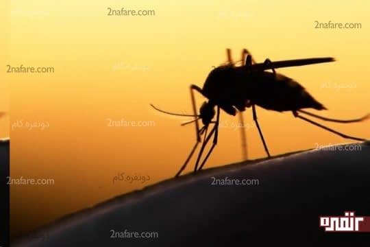 جلوگیری و التیام نیش حشرات