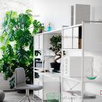 5 گیاه آپارتمانی مناسب برای تزیین فضای خانه