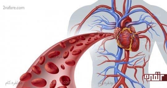 گردش خون را تسریع می کند