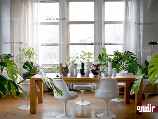 5گیاه آپارتمانی مناسب برای تزیین دکوراسیون منزل