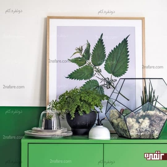 استفاده از گیاهان طبیعی در دکوراسیون داخلی