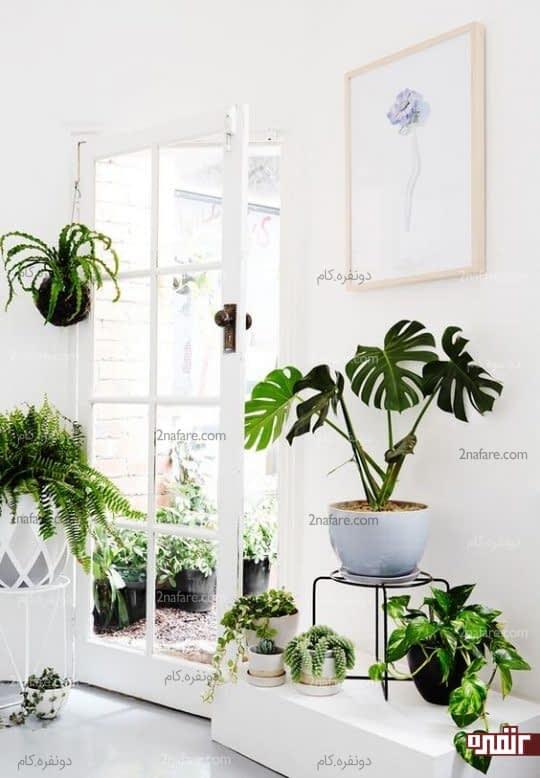 ترکیب رنگ فوق العاده سبز و سفید برای دکورداخلی