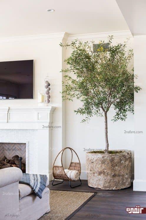 تزیین دکور اتاق نشیمن با درختچه زیتون