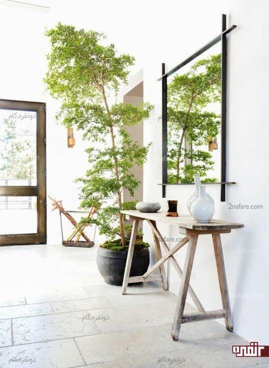 تزیین دکور راهروی ورودی با درختچه آپارتمانی زیبا