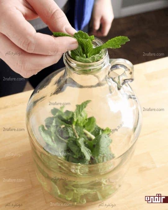 قرار دادن برگ های نعنا در ظرف