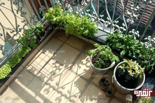 پرورش انواع سبزی جات در تراس