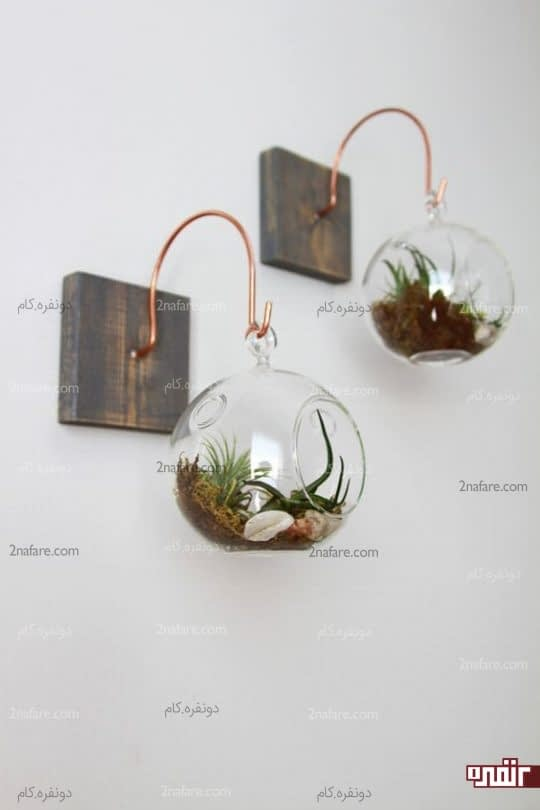 گلدونهای دیواری با گیاهان هوازی