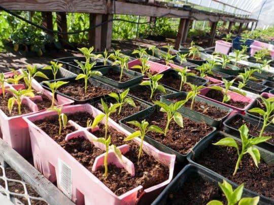 استفاده از گلدان های پلاستیکی برای کاشت گیاهان
