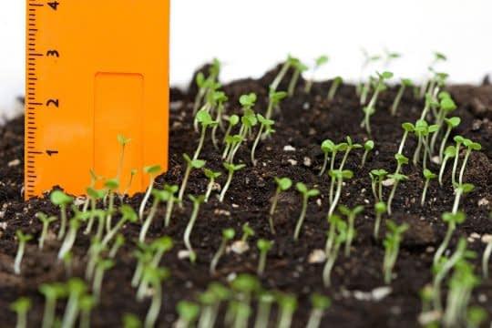 باید بین دانه هایی که در زمین میکارین فاصله مناسبی قرار بدین