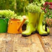 نگهداری از گل و گیاه و باغبانی در منزل
