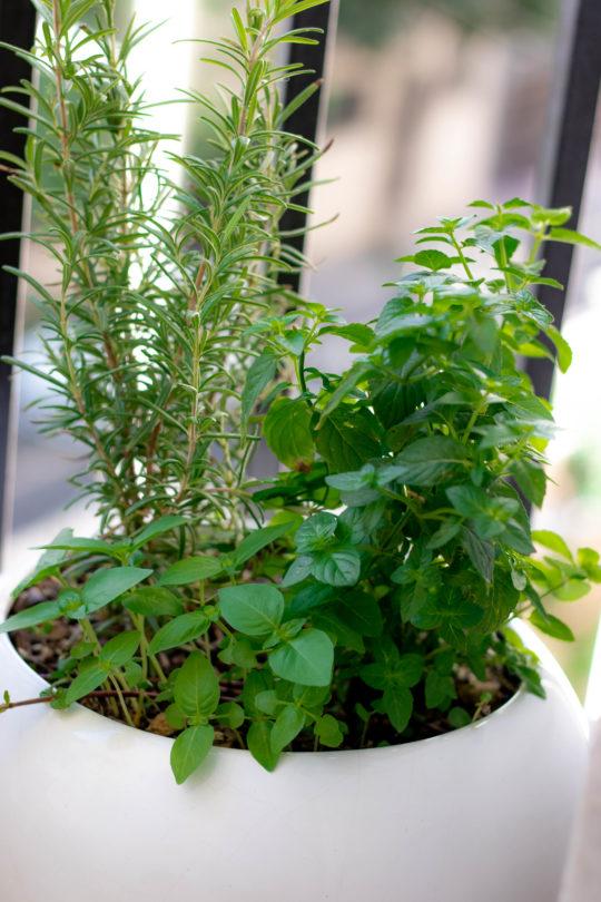 پرورش سبزی