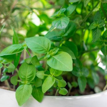 کاشت سبزی در تراس