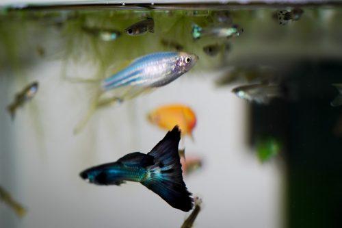 ماهی های آکواریوم میمیرن