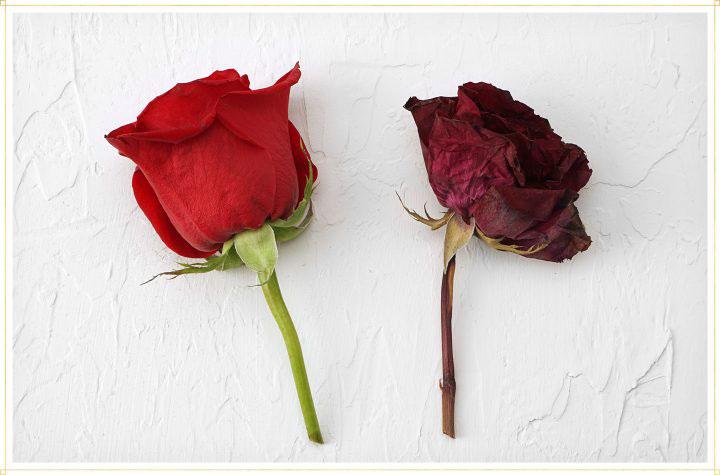 گل خشک شده
