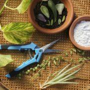 چطور باید از هورمون ریشه زایی گیاهان استفاده کنیم؟