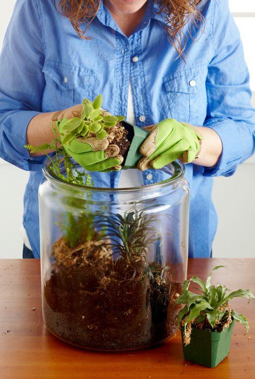 گذاشتن گیاه در ظرف